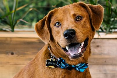 Meet Miner: Little Rock Soirée's Cutest Dog 2018