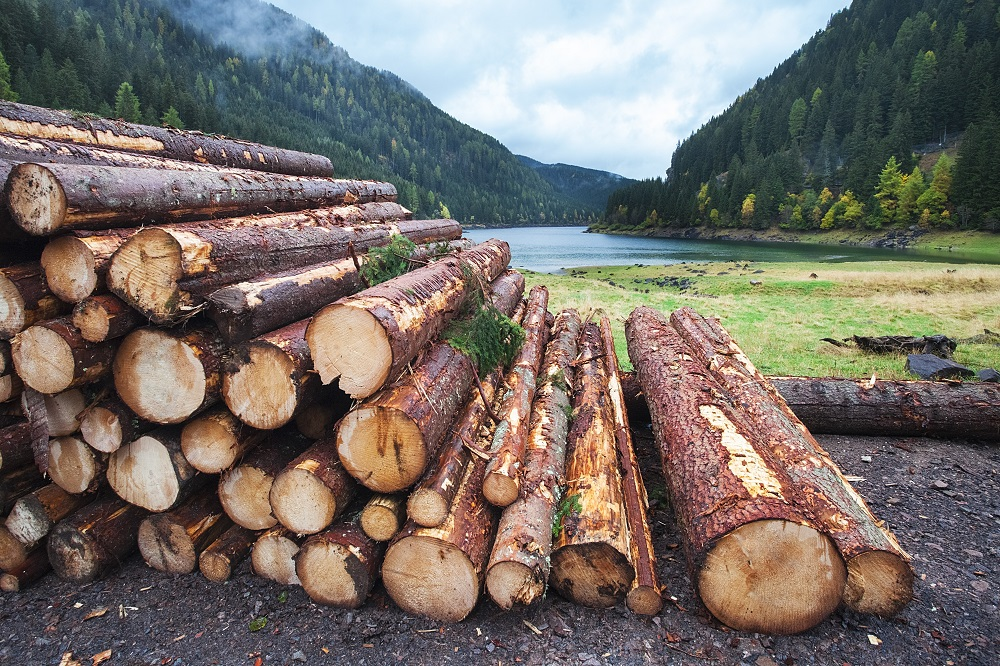 pile-of-logs-forest