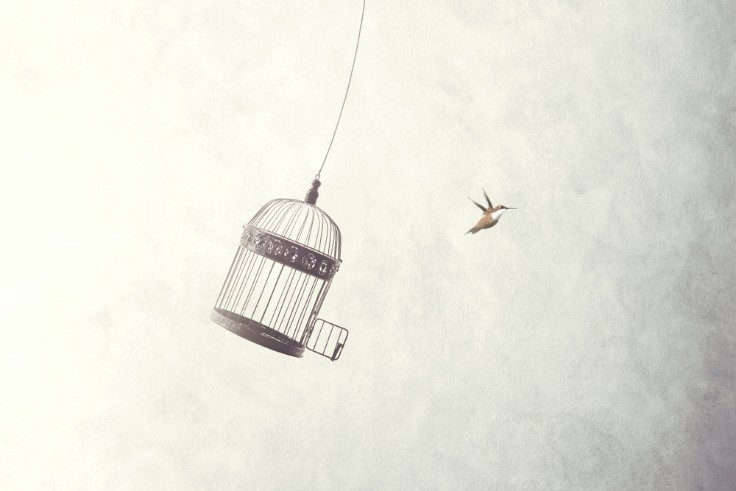 Bird_Flying_Out_Of_Cage