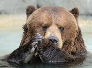 Are the Markets More Rational Than the Average Bear?