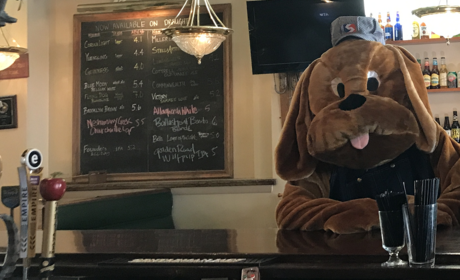 Paws pub beer