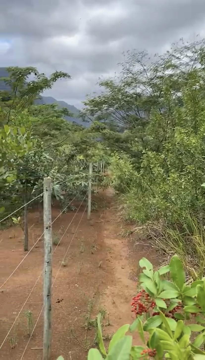 Confecções e Manutenção de cercas