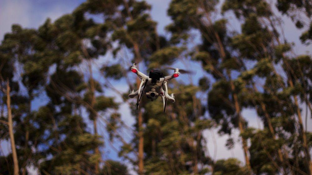 Inovação tecnológica no monitoramento Florestal