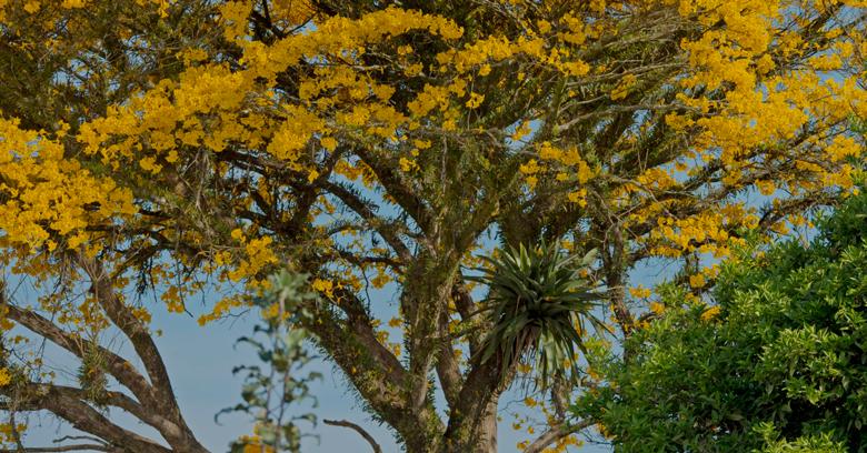 Entenda o projeto técnico de reconstituição de flora e as leis que as regem