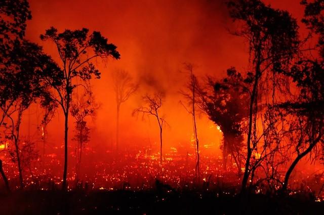 Para evitar queimadas, é preciso investir em conscientização ambiental