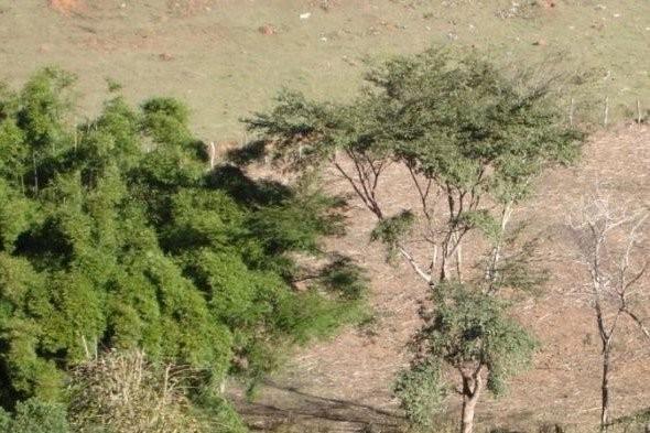 Elaboração e Execução do Plano de Arborização Urbana