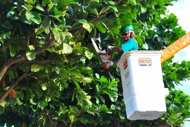 Serviço de manutenção e podas de vegetação urbana