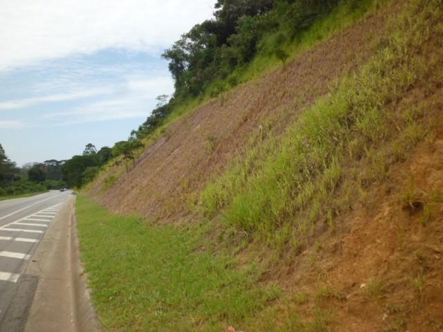 Plantio de encostas, aterros ou taludes por hidrossemeadura