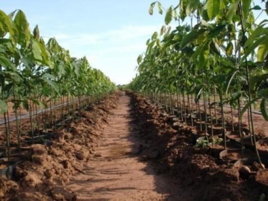 Utilização de SAFs (Sistemas Agroflorestais) para RADs (Recuperação de Áreas Degradadas)