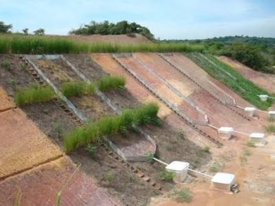 Elaboração de Projetos RAD's (Recuperação de Áreas Degradadas), acompanhamento e implantação