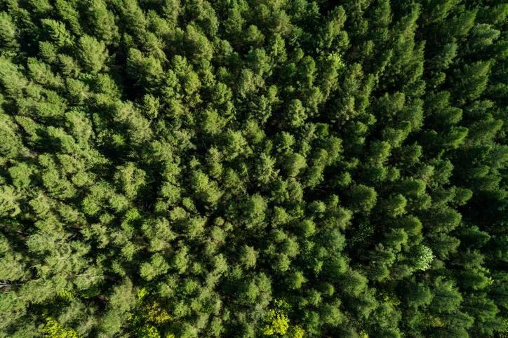 Startup brasileira de reflorestamento facilita compensação ambiental de grandes empresas