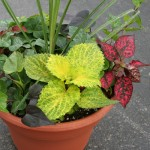 foliage-planter-150x150
