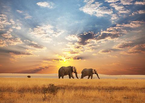 the plains of africa national park traveller