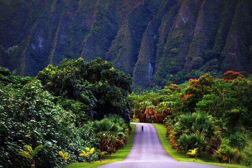 Delight At Tropical Plants In Oahu, Visit The Most Beautiful Botanical  Gardens In Kauai And Explore The Natural Undeveloped Town Of Hana On Maui  When You ...