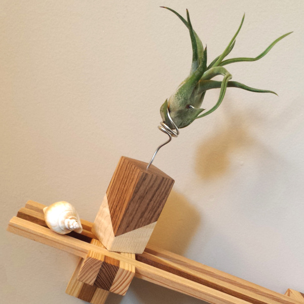 Air Plant Sculpture   with Makai Project
