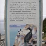 Sea-birds-6687