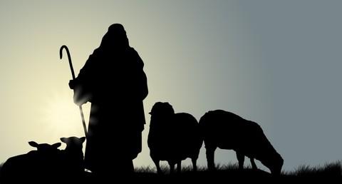 Shepherd_dark