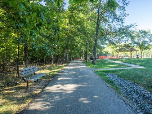 path, tree, nature reserve, trail