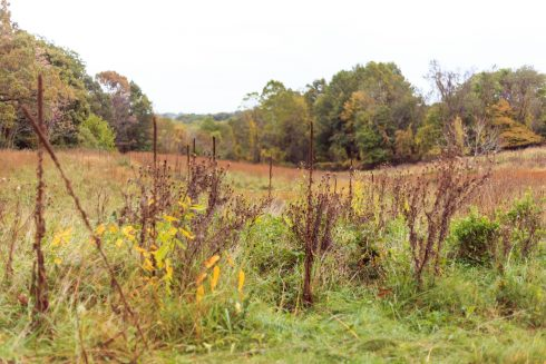 Open space at Blunt Road Local Park that features vegetation, nature reserve, tree, shrubland, prairie,