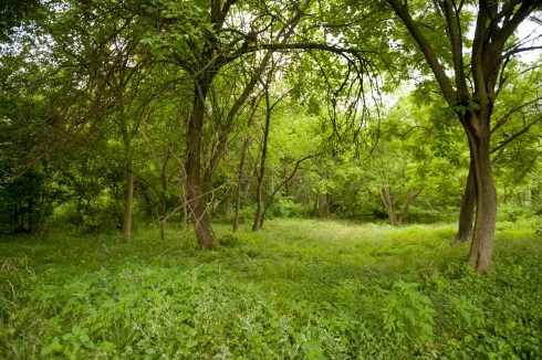 Forest at Carroll Knolls Local Park