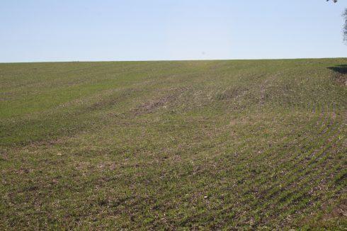 field, grassland, ecosystem, crop, agriculture, prairie, grass, plain, grass family, pasture