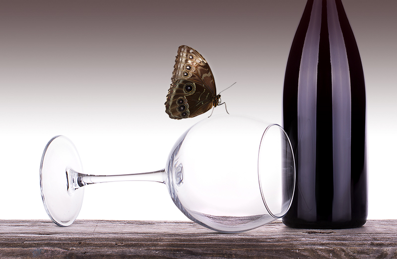 Garden After Dark: Wine and Wings