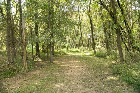 Tree, Woodland, Forest, Natural environment, Natural landscape, Nature, Nature reserve, Vegetation, Grove, Biome