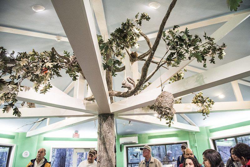 The Locust Grove Exhibit Tree