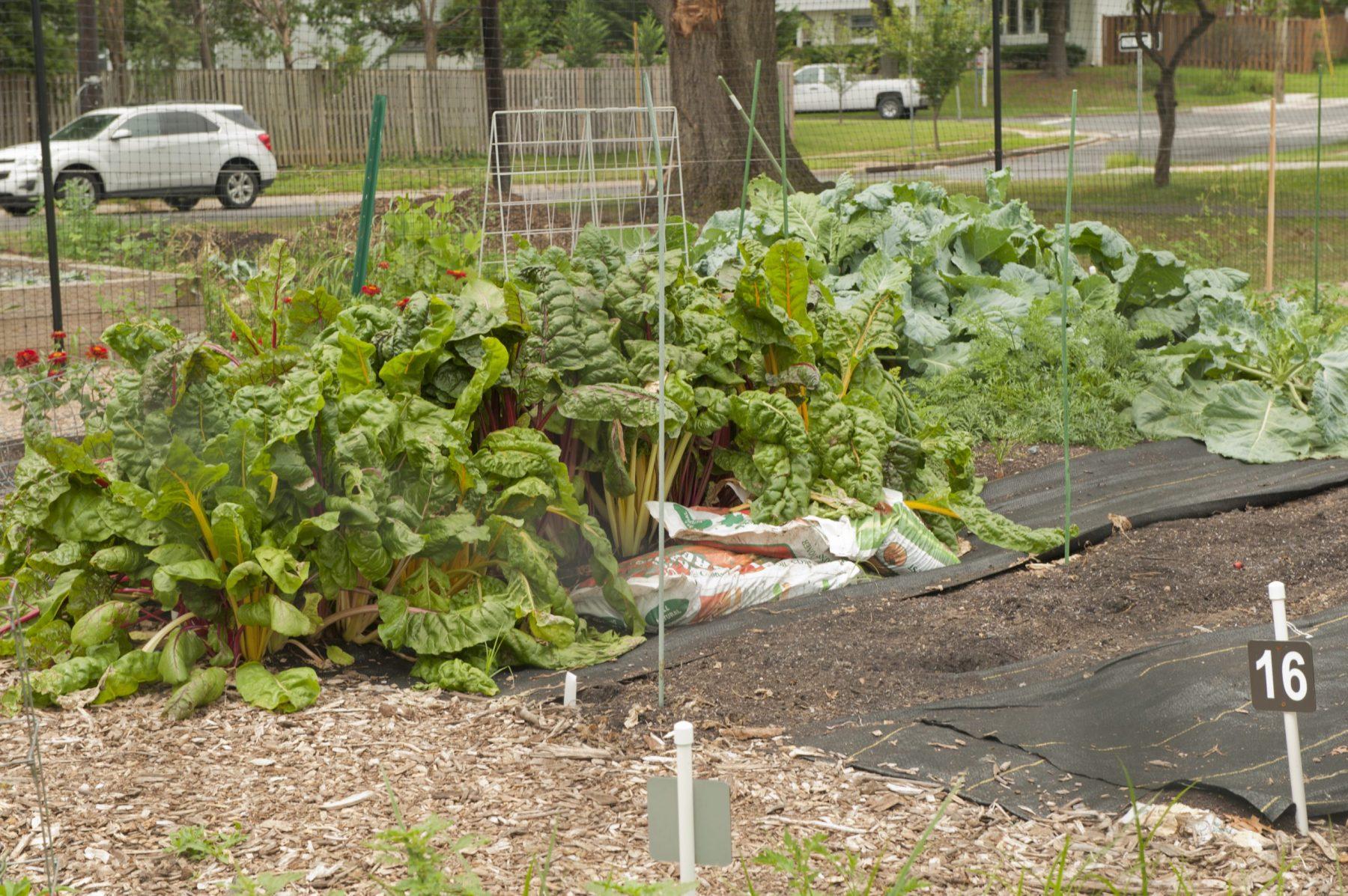 The Community Gardens Program