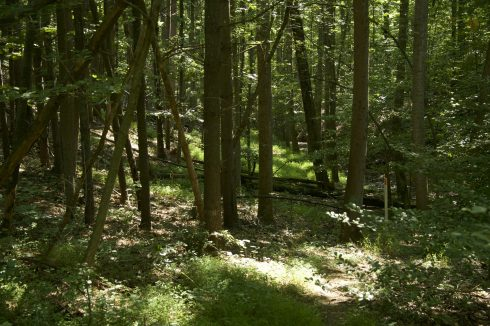 Woods at Buck Branch Stream Valley Park