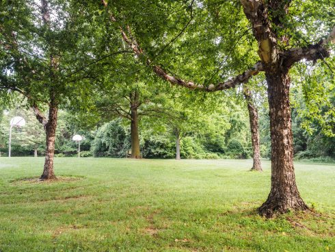 Trees at Cherrywood Local Park