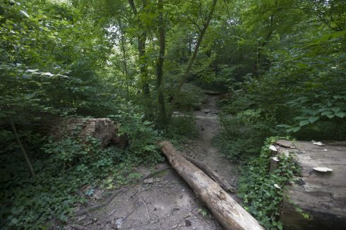 View of a persevered trail on the Dartmouth Neighborhood Conservation Area