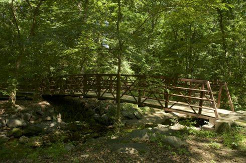 Bridge at Drake Drive Neighborhood Conservation Area