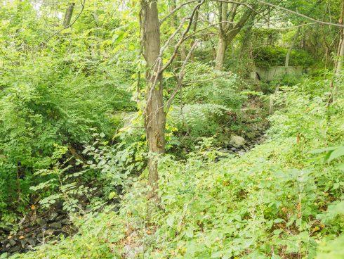 Emory Grove Hills Neighborhood Conservation Area