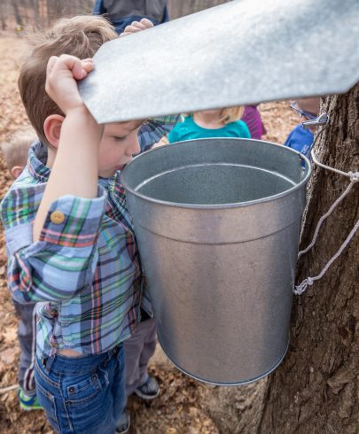 Young boy looking into the metal bucket attached to the maple tree