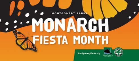 Graphic Illustration of Monarch Fiesta Month at Black HIll Regional Park, Starts September 1