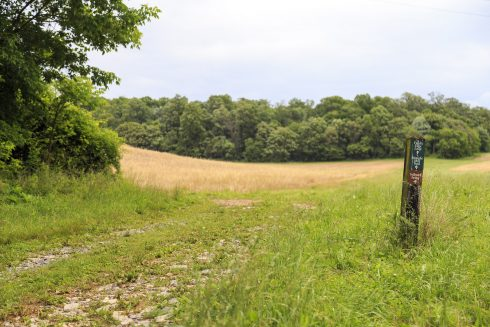 Looking toward an agricultural field at the intersection of the Field's Edge Loop and Straight Shot Trail