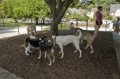 A group of dogs look at each other in the shade at Ellsworth Urban Dog Park