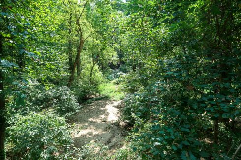 Vegetation, Nature reserve, Forest, Natural environment, Tree, Natural landscape, Nature, Green, Valdivian temperate rain forest, Tropical and subtropical coniferous forests