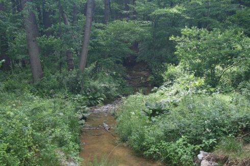 vegetation, riparian zone, ecosystem, nature reserve, wilderness, riparian forest, stream, tree, forest