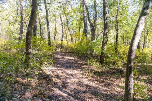 Tree, Forest, Woodland, Natural environment, Nature, Nature reserve, Northern hardwood forest, Natural landscape, Trail, Woody plant