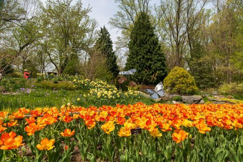 Flowers at Brookside Gardens