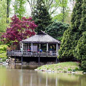 Natural landscape, Property, Cottage, House, Bayou