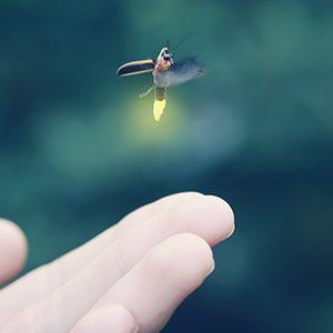 Hand, Lightning bug