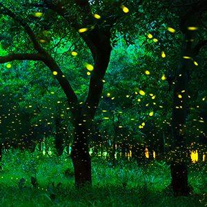 lightning bugs illuminated at night