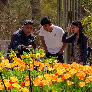 Three people looking at yellow and orange flowers