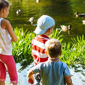 children looking at ducks in the water