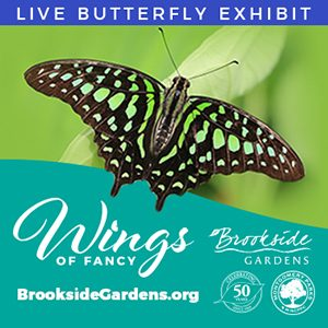 Live Butterfly Exhibit - Wings of Fancy Graphic - Green Butterfly