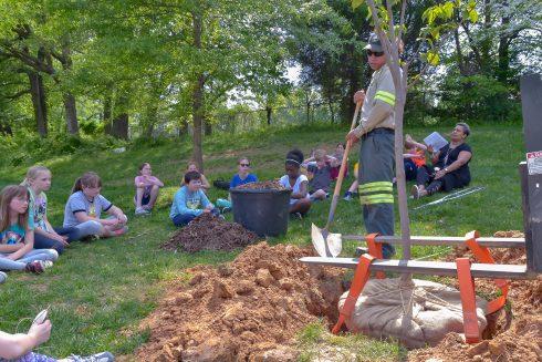Soil, Community, Tree, Arbor day