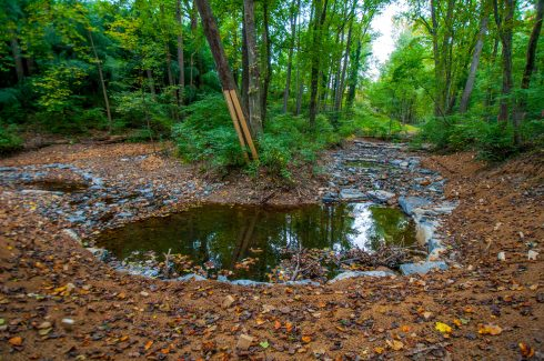 Natural landscape, Nature, Natural environment, Nature reserve, Forest, Water, Leaf, Tree, Riparian zone, Woodland